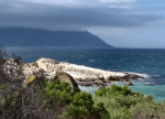 Penguins in distance in front of ocean, Boulders Beach, Cape Town.