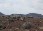 Giraffe in front of hills, Kunene Region, Namibia.