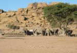 Elephants in front of rocky hill, Kunene region, Namibia.