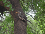 Bird in Kruger Park, South Africa.